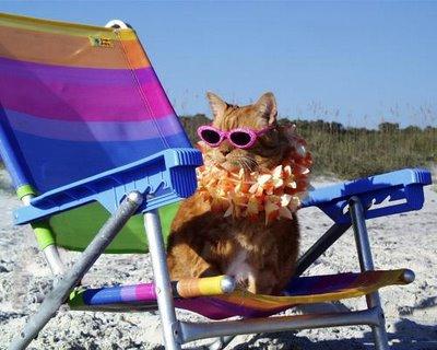 cat-beach