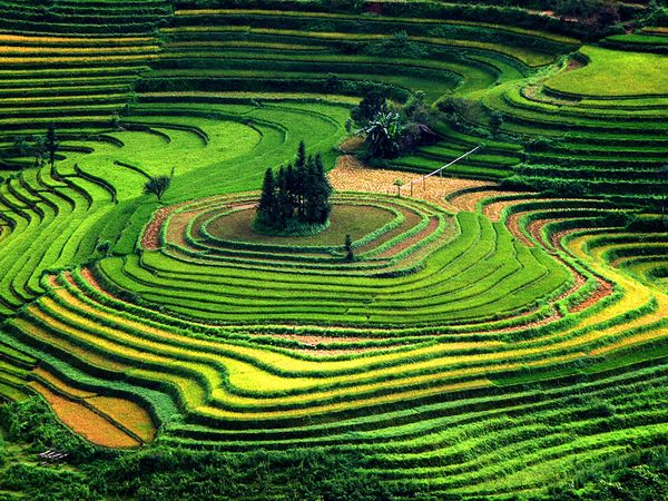 terraced-fields-vietnam_11388_600x450 (1)